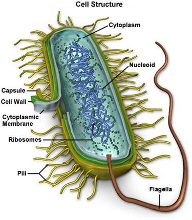 Bacteria Information
